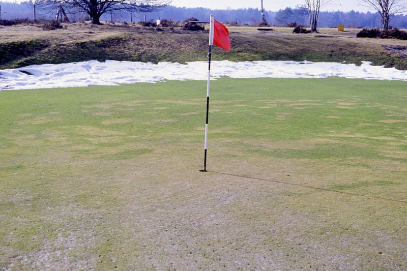 Snow damaged green